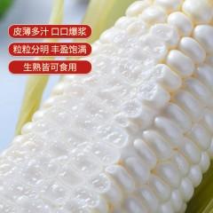 牛奶玉米  7-8支装(2kg)单支300g左右 粒粒爆浆 淡淡奶香味