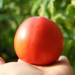 云供销社直供 新鲜现摘西红柿3斤番茄 自然成熟 不催熟