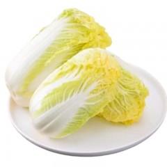 云南供销社直供 云南高山娃娃菜4斤 新鲜蔬菜 坏单包赔