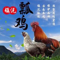 镇沅瓢鸡(1.2-1.5公斤)