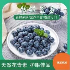 大果15-18mm,125g*6盒顺丰包邮蓝莓鲜果云南高原水果现摘现发
