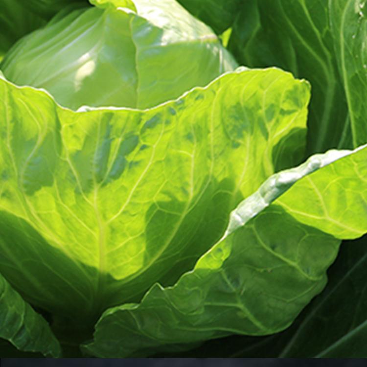 新鲜蔬菜_07.jpg