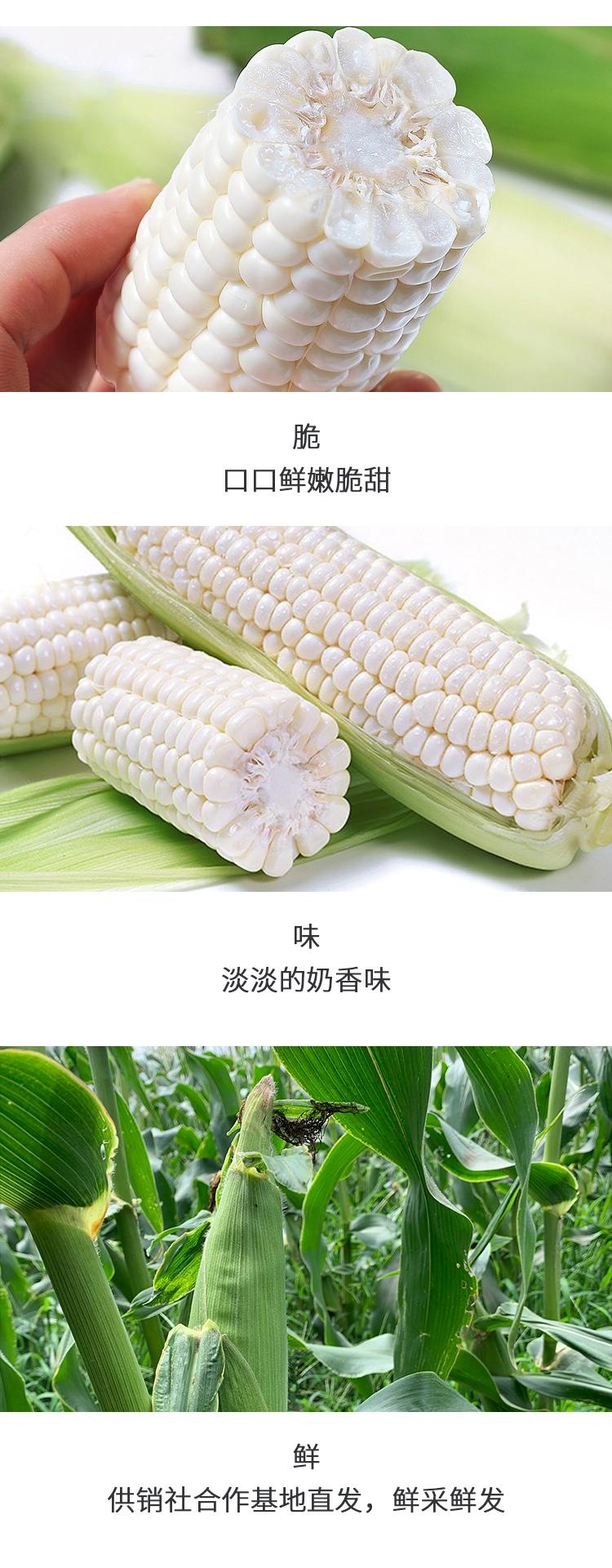 牛奶玉米修改2_05.jpg