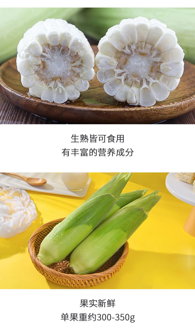 牛奶玉米修改2_07.jpg