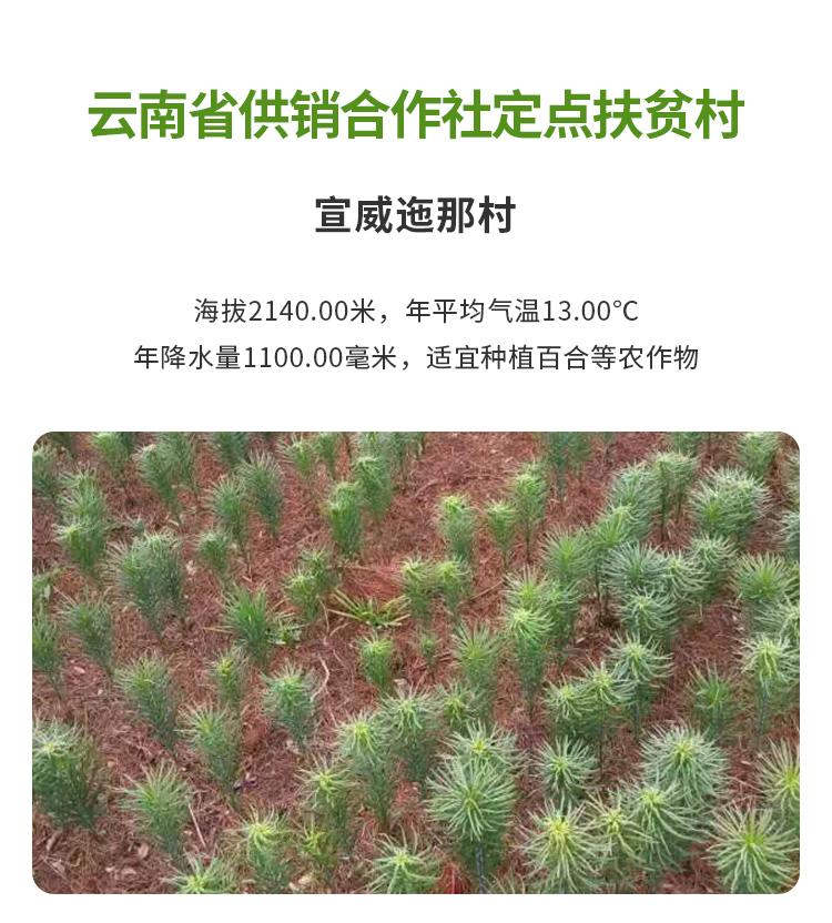 新鲜百合详情页_09.jpg